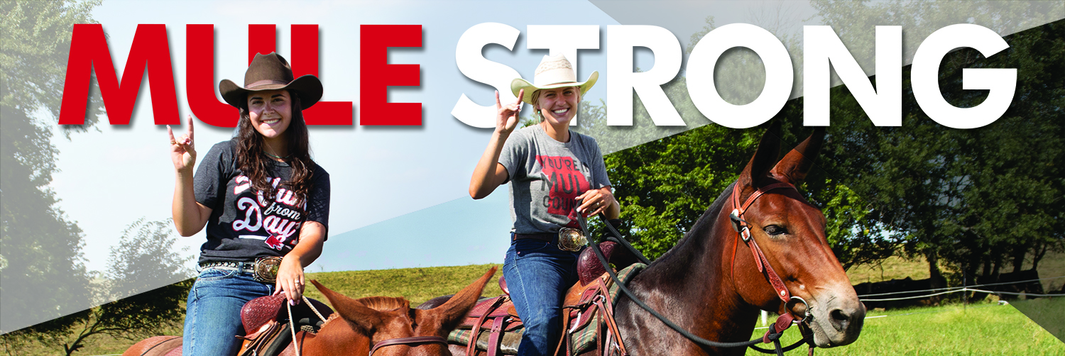 Mule Strong header small